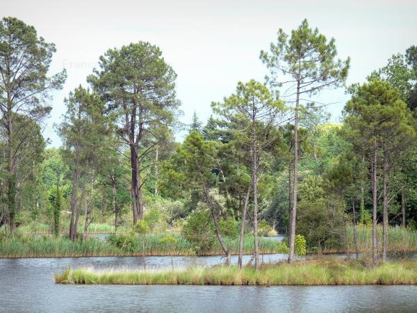 Parc Naturel R 233 Gional Des Landes De Gascogne 8 Images De Qualit 233 En Haute D 233 Finition