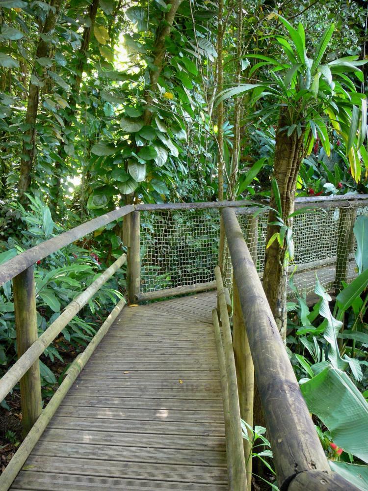 Photos parc zoologique et botanique des mamelles 30 for Jardin zoologique tropical