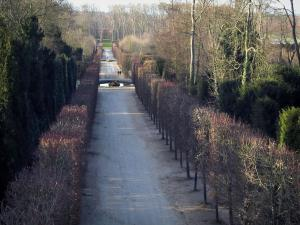 Park of the Palace of Versailles - Path lined with trees and decorated with ponds