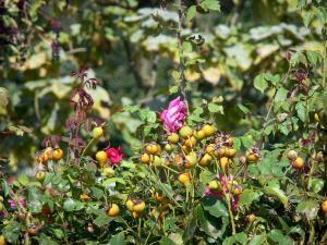 Parque chemins de la rose 8 im genes de calidad en alta definici n - Jardin de la rose doue la fontaine ...