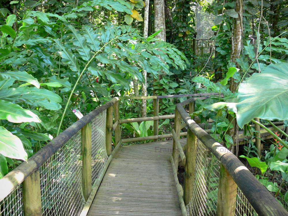 Fotos el parque zool gico y bot nico de las mamelles for Jardin botanico cursos