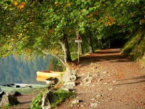 Pavin lake - Tree-shaded path along the lake and boats; in the Auvergne Volcanic Regional Nature Park, in the Massif du Sancy mountains (Monts Dore)