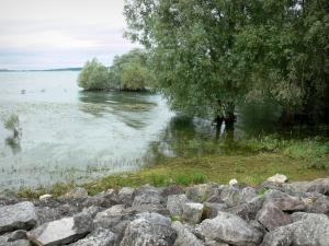 Pays du Der - Der Lake (artificial lake) and its trees in water