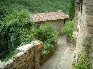 Penne - Narrow narrow street, vegetation, stone houses and forest
