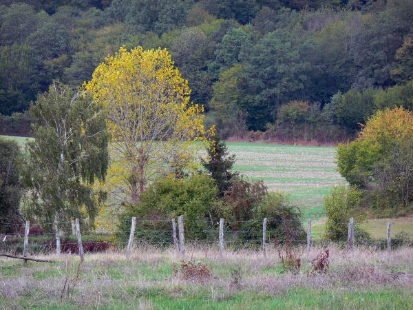 Perche Regional Nature Park - Meadows, fence, shrubs, trees and forest