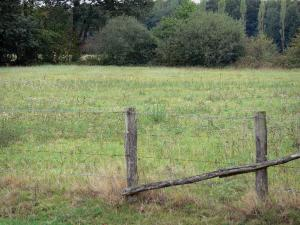 Perche Regional Nature Park - Fence, prairie (meadow) and trees