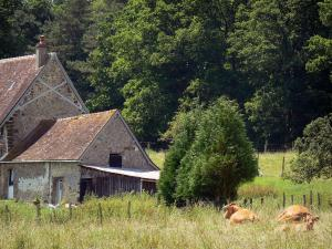 Perche Regional Nature Park - Stone farmhouse, cows in a meadow, and trees