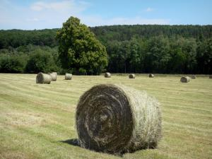 Perche Regional Nature Park - Bales of hay in a field and forest in background