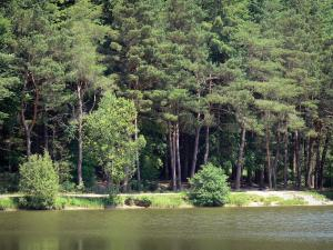 Perche Regional Nature Park - Trees beside a pond