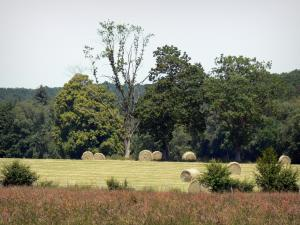 Perche Regional Nature Park - Bales of hay in a field and trees