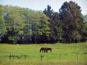 Périgord-Limousin Regional Nature Park - Horses in a prairie and trees
