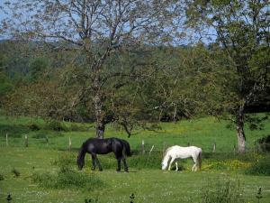 Périgord-Limousin Regional Nature Park - Horses and trees in a prairie dotted with wild flowers