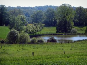 Périgord-Limousin Regional Nature Park - Meadows, pond, trees and forest