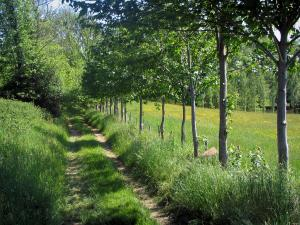 Périgord-Limousin Regional Nature Park - Road lined with trees and prairie dotted with wild flowers