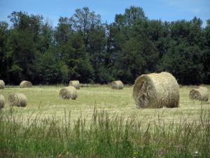 Périgord-Limousin Regional Nature Park - High vegetation in foreground, straw bales in a field and trees