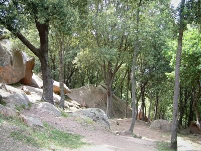 Piana forest