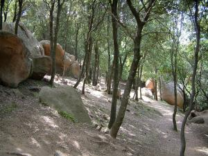 Piana forest - Red granite rocks and trees