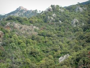 Piana forest - Hill covered with trees