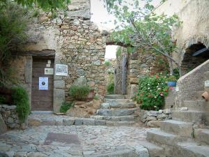 Pigna - Paved ground, small stairways, flowers, plants, fig tree and houses in the village (in the Balagne region)