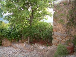 Pigna - Paved ground, stone wall, plants and trees