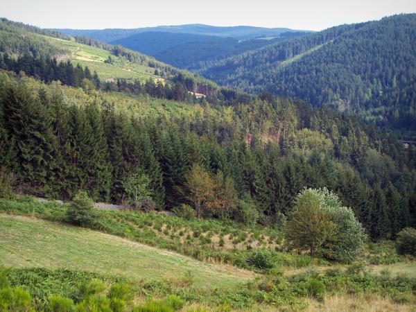 Pilat Regional Nature Park - Pilat mountain area: hills covered with forests and meadows