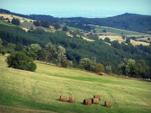 Pilat Regional Nature Park - Pilat mountain area: haystacks in a meadow, trees, forests and meadows