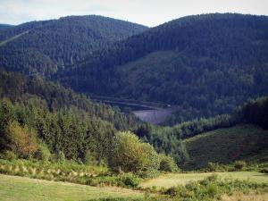 Pilat Regional Nature Park - Pilat mountain area: dam of Gouffre d'Enfer and hills covered with forests
