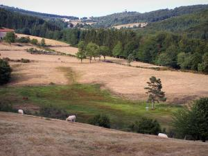 Pilat Regional Nature Park - Pilat mountain area: cows, meadows, trees, houses and forest