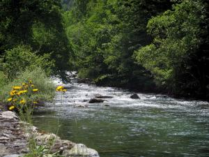 Pique valley - Wild flowers, river and trees along the water, in the Pyrenees