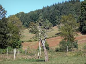 Plantaurel mountains - Pasture and trees