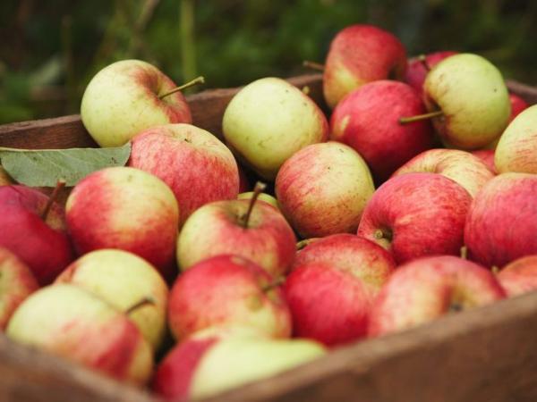 La pomme de normandie guide gastronomie vacances - Ou trouver des caisses u00e0 pommes ...