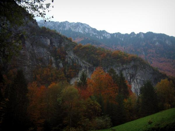 Pont du Diable gorges - Cliff and forest in autumn