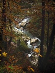 Pont du Diable gorges - Trees with autumn colours and torrent