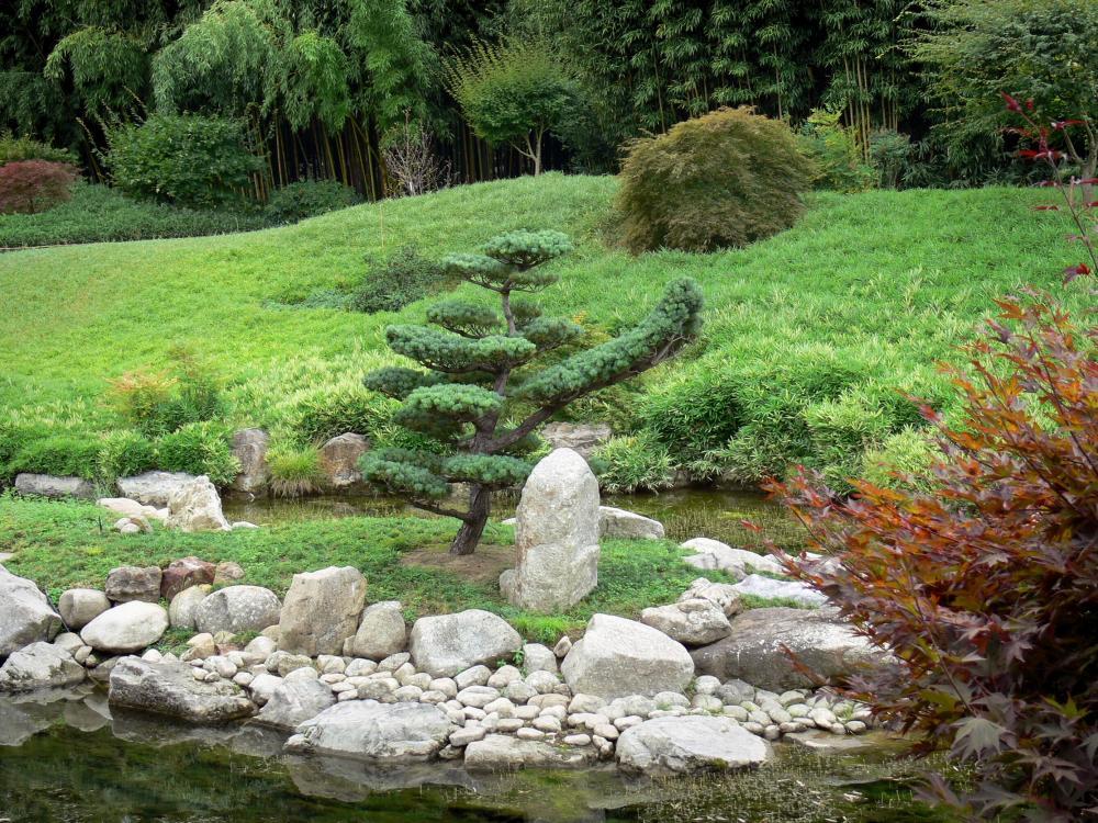 Prafrance Bamboo Garden   Bamboo Garden Of Prafrance: Bamboo Garden Of  Anduze (in The
