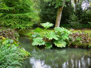 Pré Catelan garden - River, plants and trees along the water, in Illiers-Combray