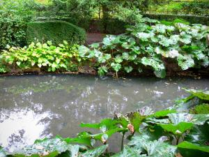 Pré Catelan garden - River lined with plants, in Illiers-Combray