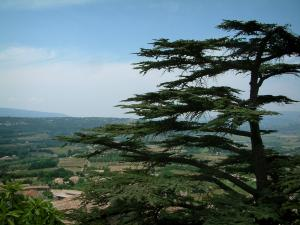 Provence landscapes - Tree and hills