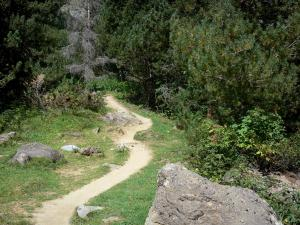 Pyrenees National Park - Hiking trails lined with trees
