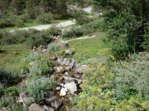 Pyrenees National Park - Creek lined with vegetation and wild flowers