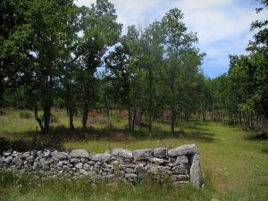 Quercy  limestone plateaux Regional Nature Park - Low wall of dry stone and trees