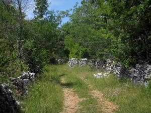 Quercy  limestone plateaux Regional Nature Park - Grassy road lined with trees and dry stone low walls