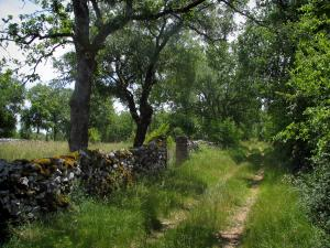 Quercy  limestone plateaux Regional Nature Park - Grassy road, dry stone low wall and trees