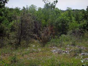 Quercy  limestone plateaux Regional Nature Park - Wild flowers, shrubs and trees