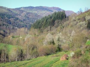 Regional Natural Park of the Ardèche Mountains - Meadows, trees and forest
