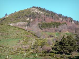Regional Natural Park of the Ardèche Mountains - Pastures and trees