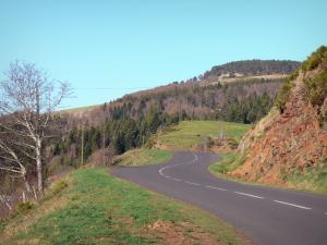 Regional Natural Park of the Ardèche Mountains - Road at the entrance of a forest