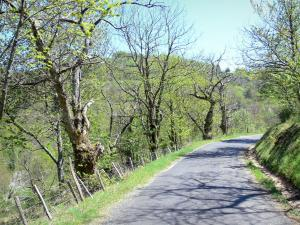 Regional Natural Park of the Ardèche Mountains - Chestnut county: small road lined with trees