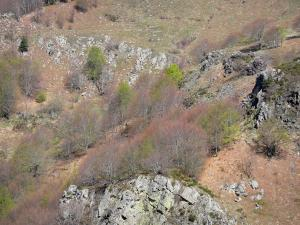 Regional Natural Park of the Ardèche Mountains - Rocks and trees