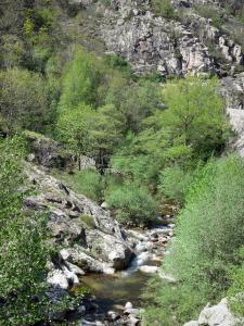 Regional Natural Park of the Ardèche Mountains - Volane valley: trees along River Volane
