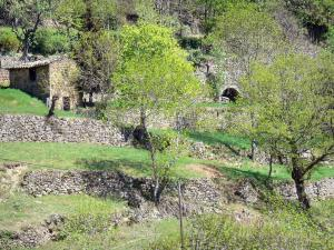 Regional Natural Park of the Ardèche Mountains - Hut surrounded by trees and dry stone terraces